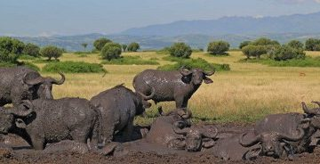 Queen Elizabeth National Park Wildlife Safari in Uganda 3 Days