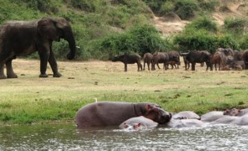 Queen Elizabeth National Park Wildlife Safari in Uganda - 3 Days uganda tour