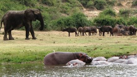 Queen Elizabeth National Park Wildlife Safari in Uganda - 3 Days uganda tour