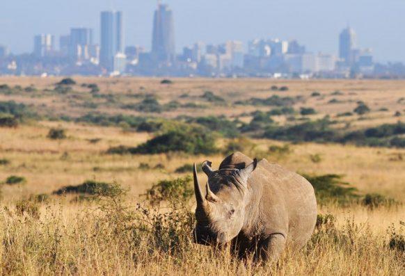 Nairobi National Park-Kenya safari news