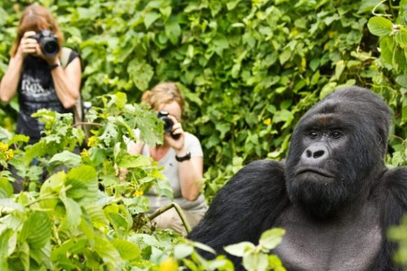 10 days wildlife safari in Uganda & gorilla tour Rwanda