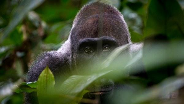 Rwanda Safari; 9 Days