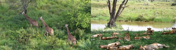 game drive in Serengeti National Park safari tour