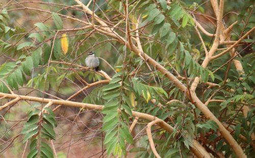 The Bird life species in Bugungu wildlife reserve.