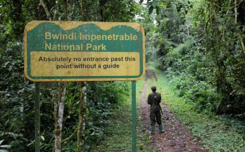 The Nature Walks in Bwindi Impenetrable National Park