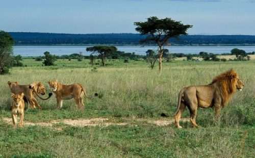 The wildlife life species in Bugungu wildlife reserve