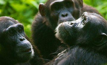 Uganda & Rwanda Safari 13 Days uganda tour