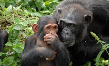 Uganda Wildlife Safari - 4 Days