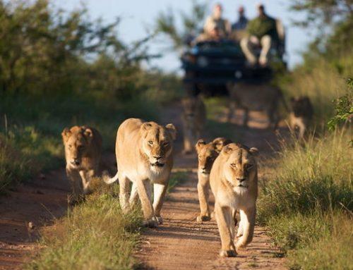Explore Tanzania's Best Wildlife Safari Destination On Your Africa Safari