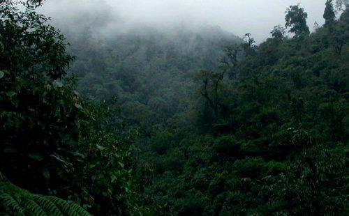 Vegetation in the Matheniko Wildlife Reserve
