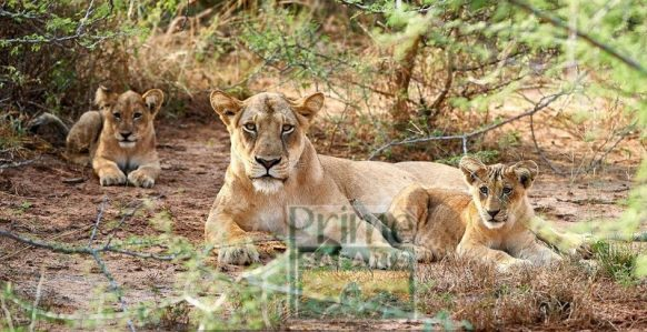 Widlife Safaris in Uganda