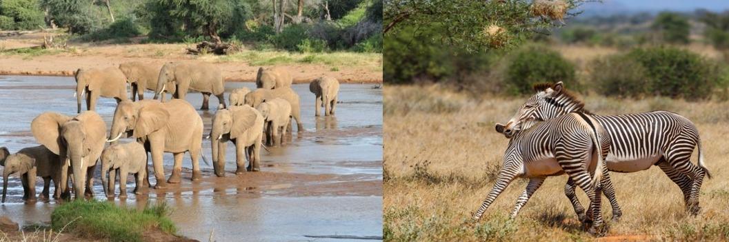 Wild life Samburu National Reserve