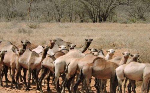 Wildlife species in the Matheniko wildlife Reserve