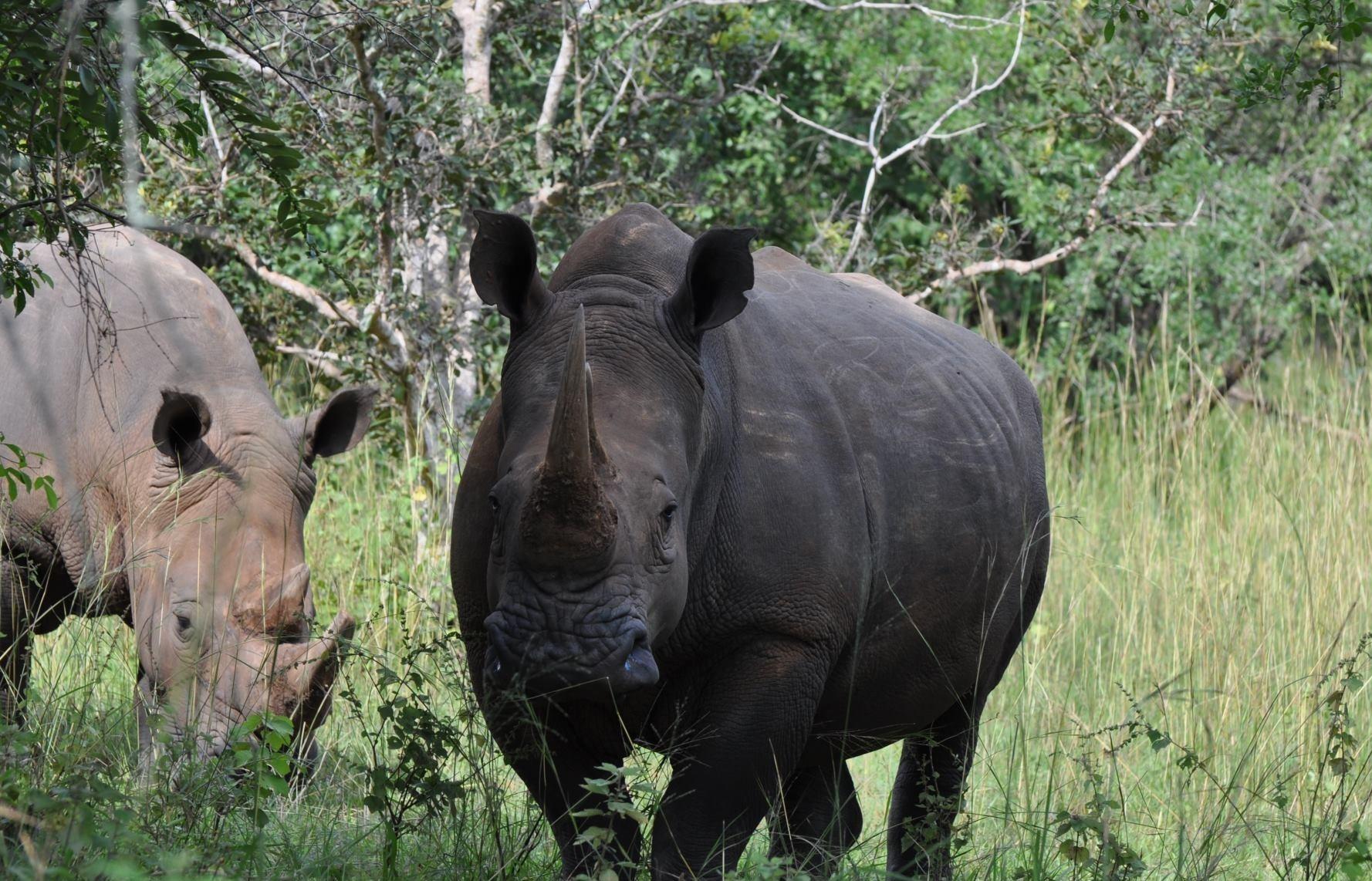 Ziwa Rhino