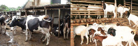 AGRICULTURE TOURS UGANDA-AGRICULTURE SAFARI UGANDA
