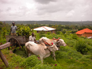 agricultural safaris in uganda
