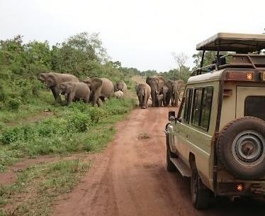 11 days Uganda gorilla trekking safari Rwanda wildlife tour