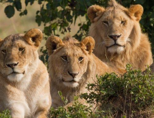 Top Rwanda safari Destinations – Rwanda Safari News