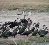 bird-uganda