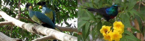 birding-mabira-forest-np