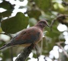 birding-uganda