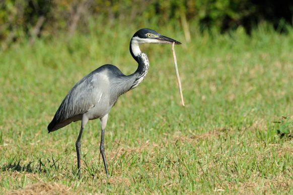 Serengeti National Park-Tanzania safari news