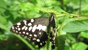 butterfly watching safaris-uganda