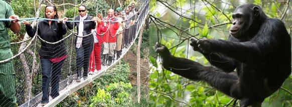 canopy-walk-chimp-trekking-rwanda
