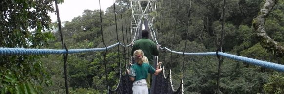 canopy-walk-in-nyungwe-national park