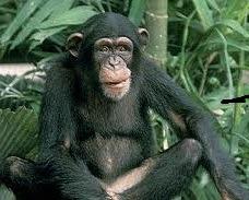 chimpanzee safaris in Rwanda