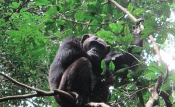 4 Days Wildlife & Chimpanzee Safari to Murchison Falls