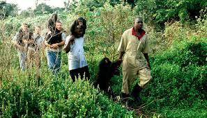 chimpanzee habituation