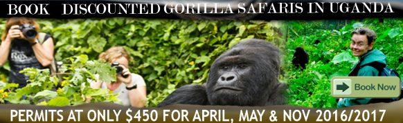 discounted-gorilla-permits-in-uganda