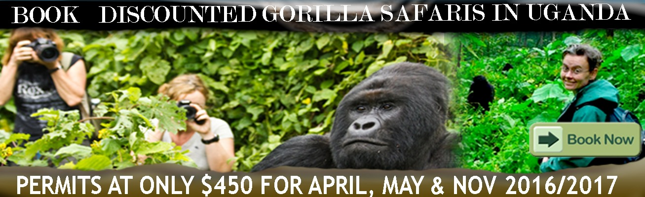 discounted-gorilla-permits-in-uganda