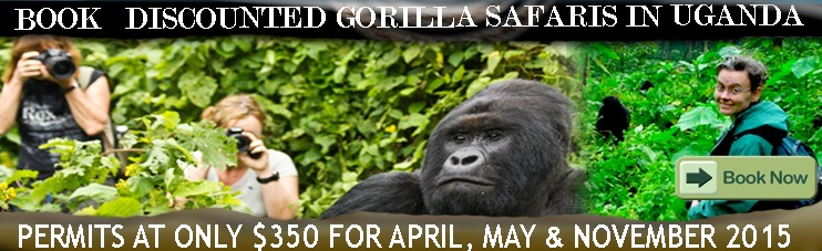 discount gorilla permits trekking in Africa Uganda Safaris Very Cheap this time