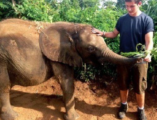 Behind the scenes experience at Uganda Wildlife Conservation Centre-UWEC