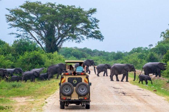 14 Days Gorilla trekking safari Uganda wildlife tour Rwanda