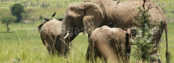 Short wildlife Safari in Uganda to Queen Elizabeth NP
