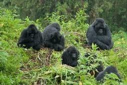 forests - uganda