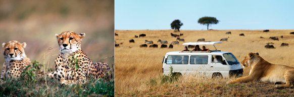 game-drive-in-kidepo-np uganda safari
