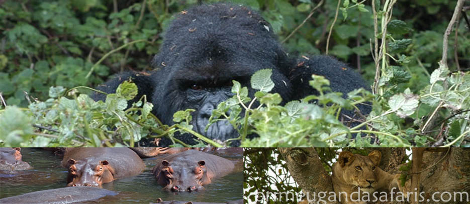 Gorilla safaris and Wildlife tour