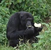 gorilla safari tours