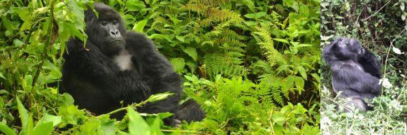 Uganda Rwanda Gorilla Safari 11 Days uganda tour