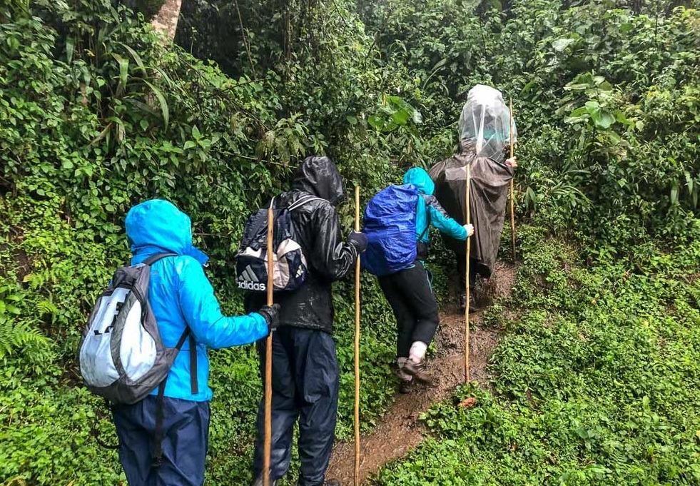 Best Time for a Uganda Gorilla Trekking Safari – Uganda Safari News