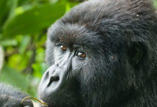 Mgahinga National Park, Uganda Gorilla trekking, Mgahinga Gorilla National Park