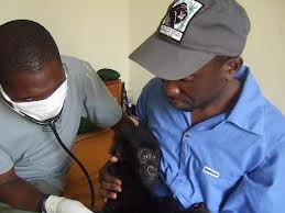 vets working on baby gorilla