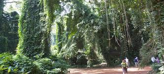 2 days Uganda birding safari in Mabamba and Entebbe botanical gardens