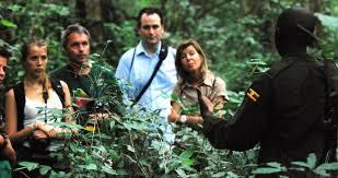 gorilla tracking safaris