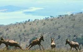 kagera national park