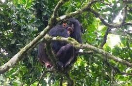 karizu forest reserve - uganda